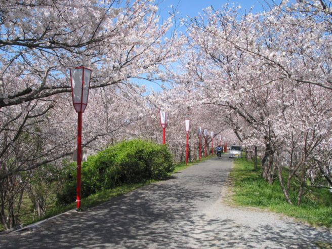 800px-cherry_blossoms_at_miyagawa-tsutsumi024